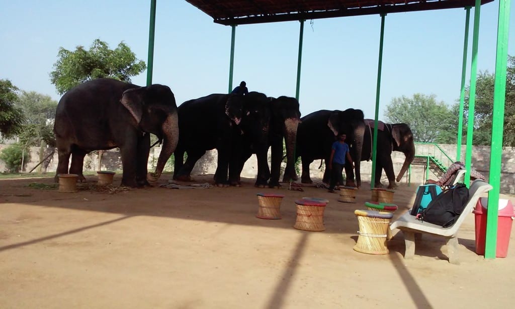 A day with with elephants in Jaipur